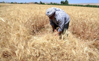Weather and conflict limit Syria's agricultural production, perpetuating food insecurity
